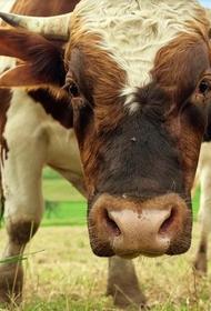 В Татарстане бык едва не лишил жизни грибника