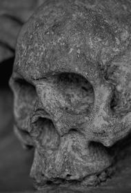 Человеческий череп нашли в подмосковном лесу
