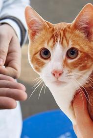 Депутат МГД Александр Козлов подчеркнул преимущества чипирования домашних животных