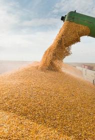 «Русагротранс» сообщил, что в августе Россия экспортировала 5,6 млн тонн зерна