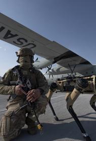 ВВС США создали собак-роботов для подготовки к бою
