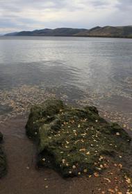 Год Байкала скоро станет объявлять поздно. Уникальное озеро уже не способно себя очищать
