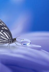 В Якутии обнаружили ранее неизвестный подвид арктических бабочек