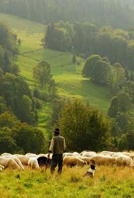 В Астраханской области от удара молнии скончались пастух и несколько овец
