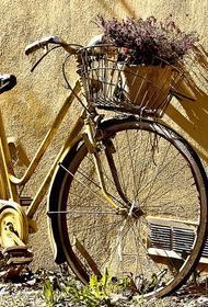 Французские власти выделили по 50 евро людям на велосипеды