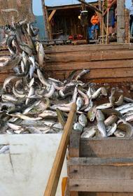 Улов лососей в Хабаровском крае превысил результат 2019 года