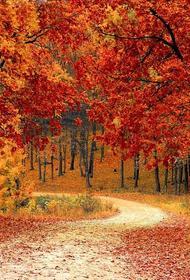 Врач-иммунолог Аплетаева заявила, что осенью следует есть продукты желтого и оранжевого цветов