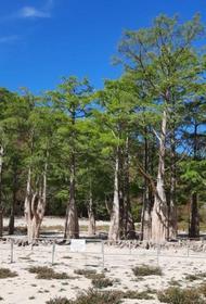 Пересохшее кипарисовое озеро в Анапе оградили от туристов