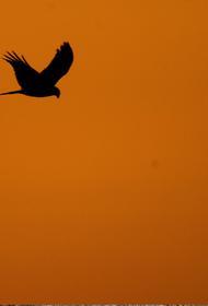 В США начали вымирать птицы