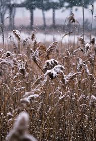 Синоптики предупредили о первом снеге в Москве
