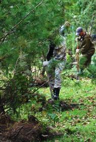 Более 60 га леса будет восстановлено в Хабаровском крае