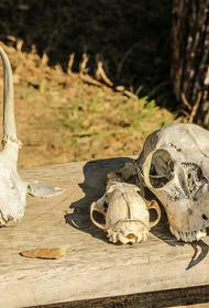 Археологи рассказали, что закрывают на консервацию раскопки Стеклянухинского городища