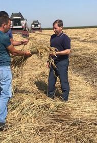 Рисосеющие хозяйства края стараются минимизировать потери урожая