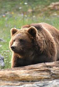 В Хабаровске на детскую площадку заглянул медведь