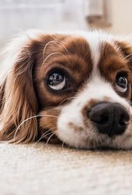 Собаку, которая застряла под ванной, спасли в Подмосковье
