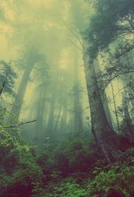 Глобальное потепление заставит растения быстро расти и так же быстро умирать