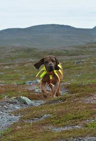 В Финляндии собак научили выявлять коронавирус