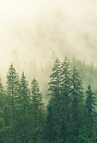В Приморье полицейские спасли пенсионерку, которая находилась в лесу два дня