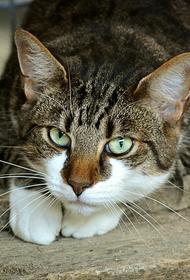 В Пензе суд оштрафовал жителя, который выбросил кота с седьмого этажа