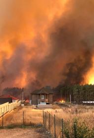 В Воронеже горят леса, в огне гибнут целые поселки. Местные жители уверены, что поджоги устраивают намеренно