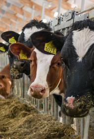 В Хабаровском крае появились «умные фермы»