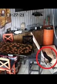Кот устроил погром в баре Краснодара