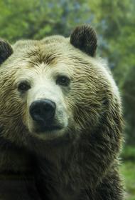 Медведь напал на дрессировщика и ребенка в цирке-шапито в Реутове