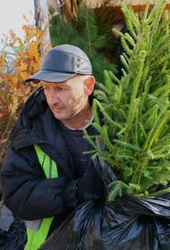 Садовод из Чувашии подарил южноуральцам 75 тысяч саженцев деревьев