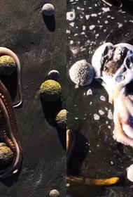 Где гибнет рыба: в 160 км от Халактырского пляжа Камчатки катастрофа длится уже годами
