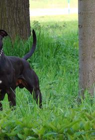 Сенатор Рязанский поддержал идею об обязательных курсах для хозяев собак крупных пород