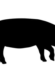 В районе Ай-Петри удар молнии убил стадо кабанов