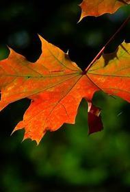 Синоптики пообещали москвичам теплую «золотую осень» на следующей неделе