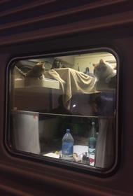 Пассажир поезда Москва-Анапа выкупил купе для своих котиков