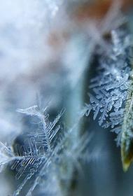 Синоптик Позднякова сообщила, что в конце недели в Москве ожидается мокрый снег