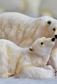 В Якутии на оленевода напала белая медведица