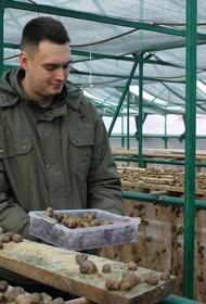 На Ставрополье будут разводить оленей и улиток