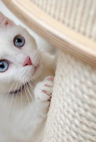Доктор Мясников объяснил, могут ли домашние животные заражать коронавирусом людей