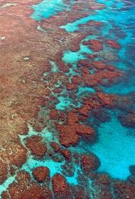Ученые: исчезла половина кораллов Большого Барьерного рифа