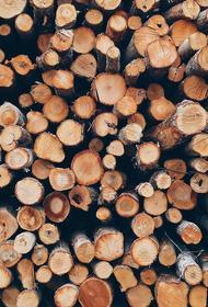 Краснодарские таможенники пресекли контрабанду леса почти на 40 млн руб.
