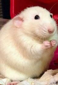 Эксперимент над мышами показал будущее человечества