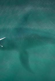 Австралию атаковали акулы-убийцы