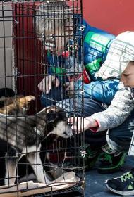 Депутат МГД Александр Козлов рассказал о новом онлайн-сервисе по подбору питомцев из приютов