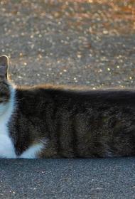 В Тверской области произошла авария из-за кота