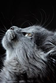 В Тверской области бродячий кот спровоцировал серьезную аварию