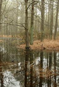 Под Тверью спасли трех заблудившихся в лесу граждан, едва не погибших в болоте