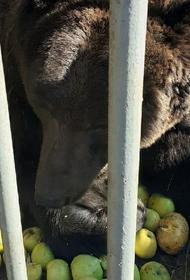 Жители Копейска подарили медведю Малышу 300 кг. лакомств