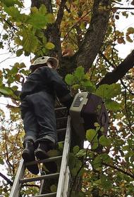 На Кубани спасатели сняли кота с дерева