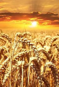 В Воронежской области был собран рекордный урожай зерна