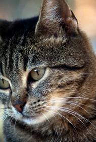 Женщину привлекли к уголовной ответственности за убийство кота