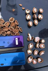 МВД: в Краснодаре спрятали почти 100 грамм наркотиков в скорлупу от орехов